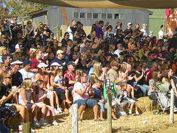 Your company picnic includes live pig races, train rides, pumpkin patch, corn maze, and much more at Bishop's Pumpkin Patch, Wheatland, California