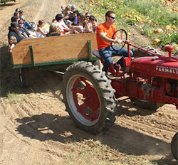 Great family fun on the tractor rides at Bishops Pumpkin Patch, Wheatland, California